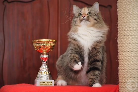 Syberyjska kotka Izyda