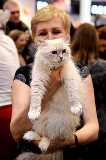 Pokaz kotów w Kaskadzie