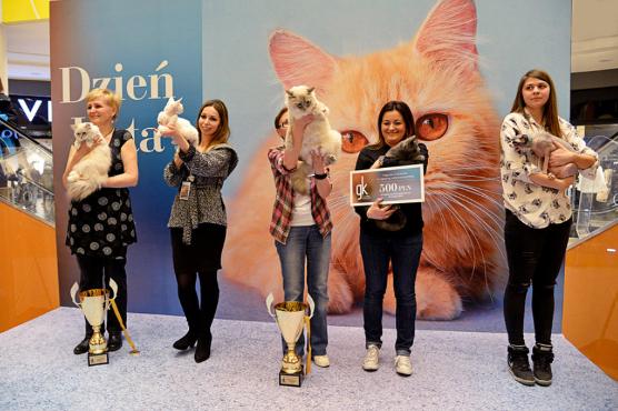 Pokaz kotów w Galerii Kaskada