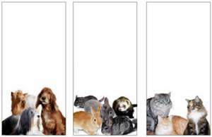 Koty w reklamie