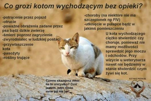 Kot w niebezpieczeństwie